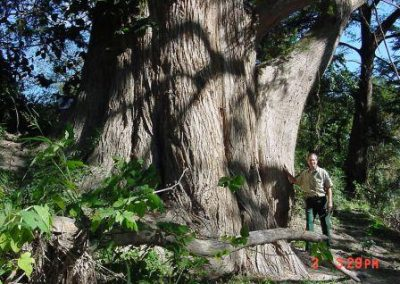 Pete & Crider cypress