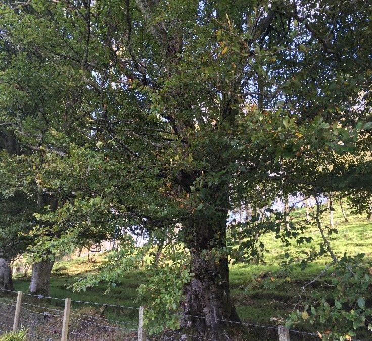 Its A Trees Life