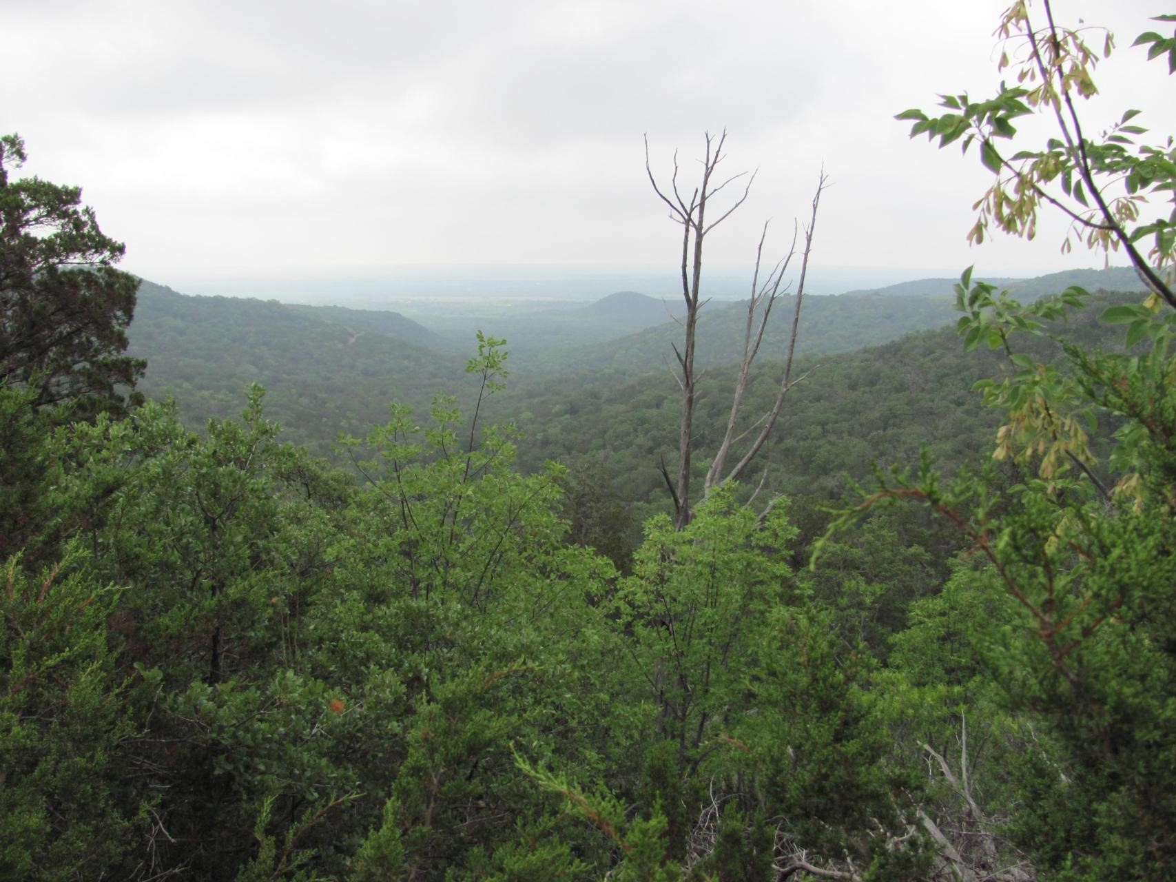A view of the west on the spring tree tour
